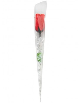 Tanga v růži